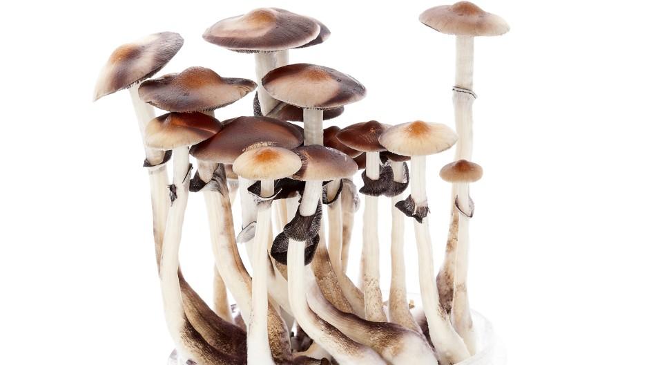 """Vielversprechender Wirkstoff: das in """"Magic Mushrooms"""" enthaltene Psilocybin"""