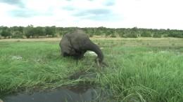 Elefantenjagd wieder erlaubt