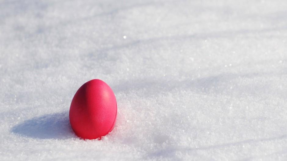 Wenigstens findet man die Eier im Schnee leichter