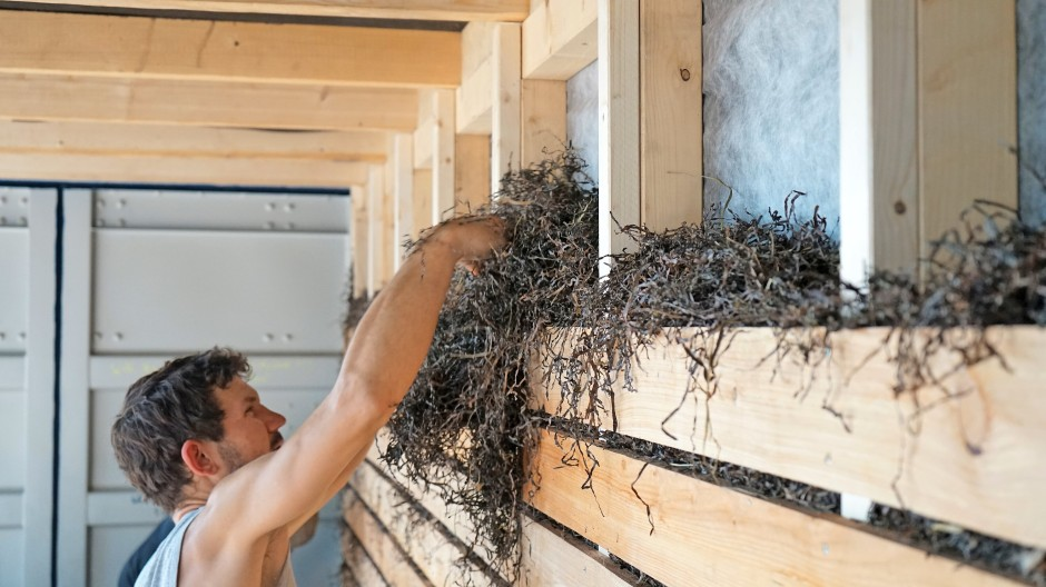 Seegras ist als Baumaterial offiziell zugelassen.