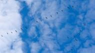 Blau – das ist die Farbe, die Jürgen Goldstein mit seiner Zitatesammlung nicht nur im Himmel sucht.