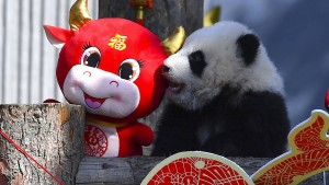 Wie Anleger Geld in China-Aktien stecken können