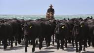 Ein Bauer und seine Rinderherde in Australien