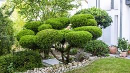 Japanischer Garten ohne Zäune