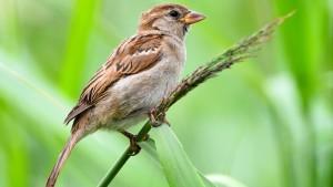 Nabu: Zahl der Vögel geht stark zurück
