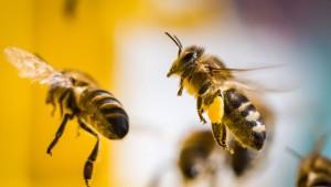 Ein guter Tag für Europas Bienen