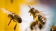 Zwei Bienen fliegen zu ihrem Stock.
