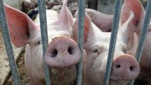 Von Killerrobotern und armen Schweinen