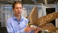 Roboter-Falke gegen Vögel
