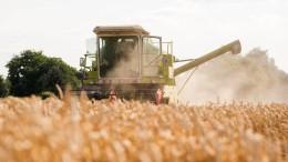 Preiskampf zwischen Fließbandnahrung und Qualitätsprodukten