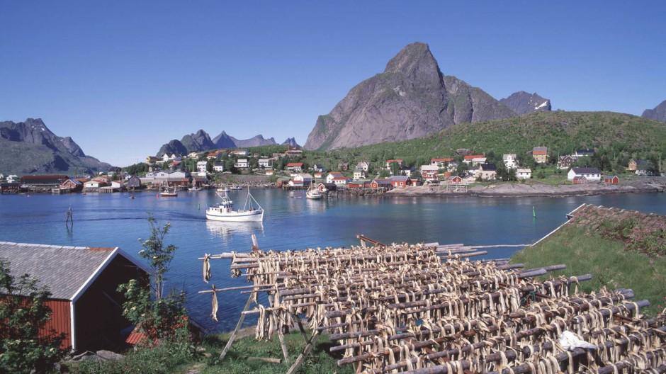 Bei Anlegern beliebt: Norwegen – Stockfisch beim Trocknen auf den Lofoten