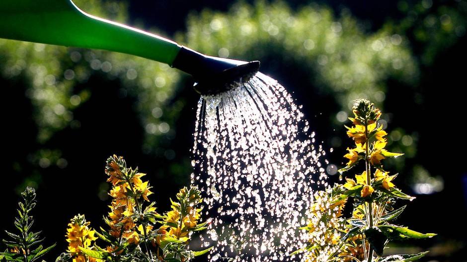 Der Wunsch nach einem schönen Garten ist bei vielen in Pandemiezeiten groß.