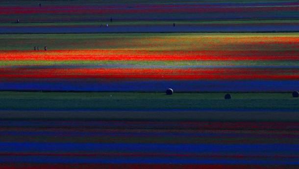 Das Blütenmeer von Castelluccio