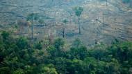 Unzählige Quadratkilometer sind im Amazonas-Regenwald den Bränden schon zum Opfer gefallen.