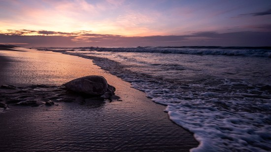 Rettung gestrandeter Meeresschildkröten