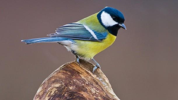 Nabu sucht ehrenamtliche Vogelzähler