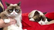 """""""Grumpy Cat"""" bekommt eine Wachsfigur"""