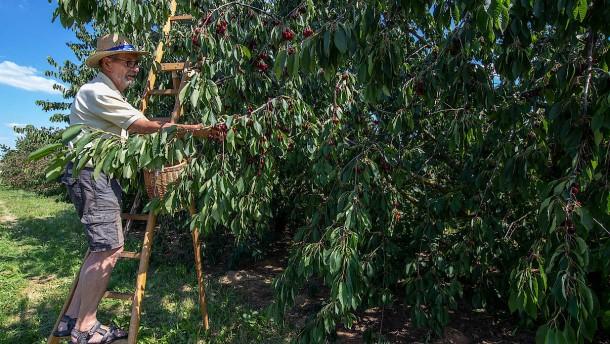 Auf Patrouille durch die Obstplantagen