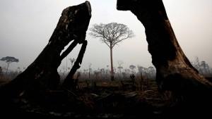 Der Wald brennt auch unseretwegen