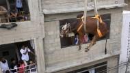 In Karatschi fliegt eine Kuh an einem Kran durch die Stadt.