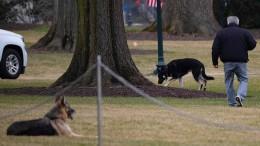 """First Dogs nach """"Beiß-Vorfall"""" nicht mehr im Weißen Haus"""
