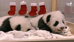 Nikolaus bei den Pandababys