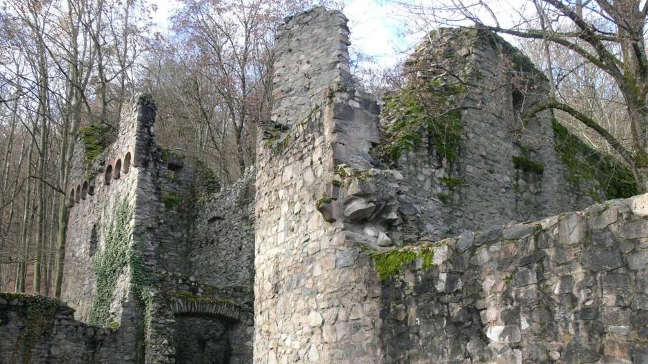 Wie den Fels haben auch die Burgruine Rodenstein längst Bäume erobert.