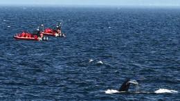 Geldstrafe für Walbeobachter in Kanada