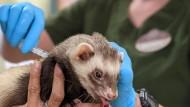 Aktie im Blick: Tiergesundheit zieht immer
