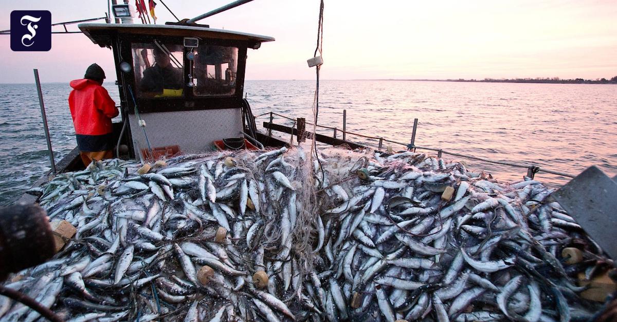 EU-Minister einigen sich auf Ostsee-Fischfangquoten