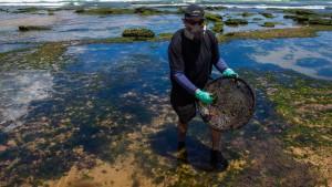 Ölpest verschmutzt Küste im Nordosten Brasiliens