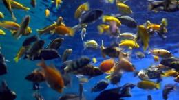Wie ein Beziehungsstreit mit dem Tod Dutzender Fische endete