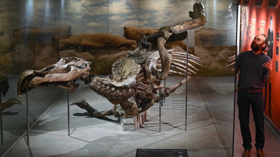 """Die Grabungsausstellung """"Edmonds Urzeitreich"""" erkundet die Herkunft des ausgestellten Edmontosaurus."""
