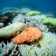 Geht die ganze Welt unter, wenn das Great Barrier Reef stirbt, ...