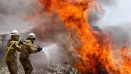 Dutzende Menschen sterben in den Waldbränden