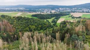 Taunusstein macht den Stadtwald stark