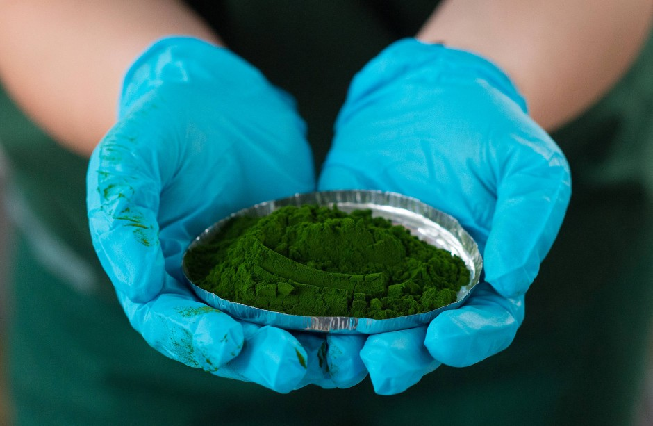 Eine Mitarbeiterin des Algenproduzenten Roquette hält in Klötze (Sachsen-Anhalt) eine Probe frisch getrockneter Algen in den Händen.