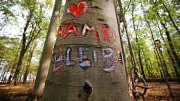 """""""Hambi bleibt"""" – ganz offiziell"""