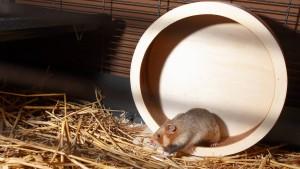 Neue Zoo-Bewohner im Schlaf kennenlernen