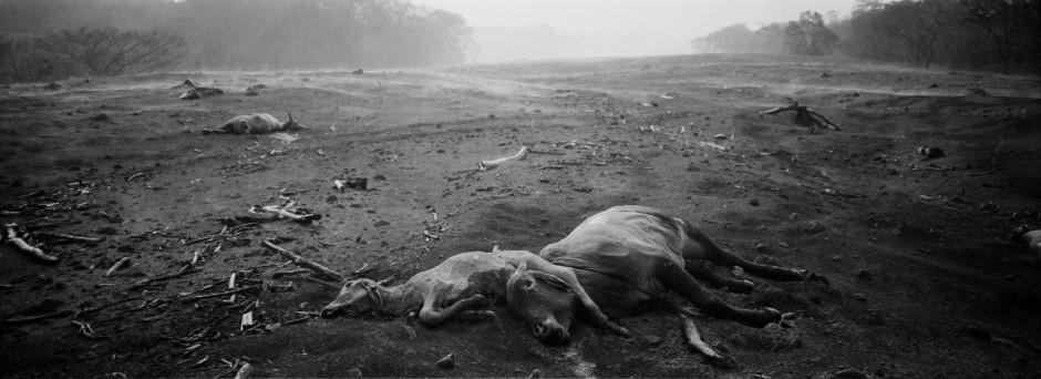 Bei San Miguel Los Lotes liegen verschlungene Tierkadaver, heiße Vulkanasche-Dämpfe steigen zum Horizont auf.