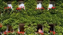 Nicht jede grüne Fassade ist ein Gewinn