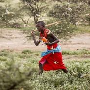 Die schrecklichste der Schrecken: In Kenia wüten die Fraßschädlinge so heftig wie seit 25 Jahren nicht mehr.
