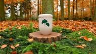 Eine biologisch abbaubare Urne steht auf einem Mustergrab im Friedwald bei Nuthetal.