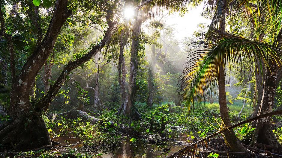 Wird der Regenwald wirklich aufgeforstet? Das überprüft das Unternehmen Sylvera mit Satellitenbildern und Künstlicher Intelligenz.