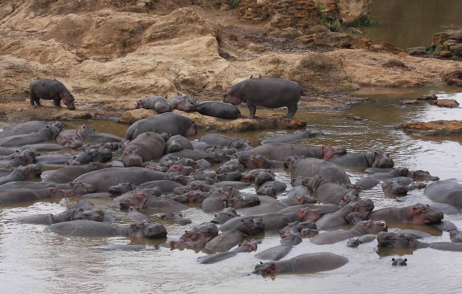 """Sogenannte """"Hippo-Pools"""": Entspannungsoase und WC zugleich."""