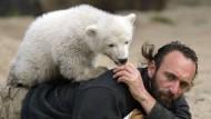 Tod von Eisbär Knut ist aufgeklärt