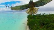 Angriff auf die Drohne, das Foto entstand in Französisch-Polynesien.