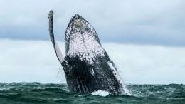 Wal verpasst Taucher Ohrfeige