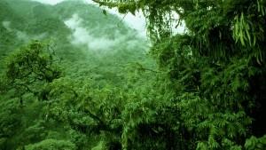 Mit Bäumen die Welt retten? Träumt weiter!
