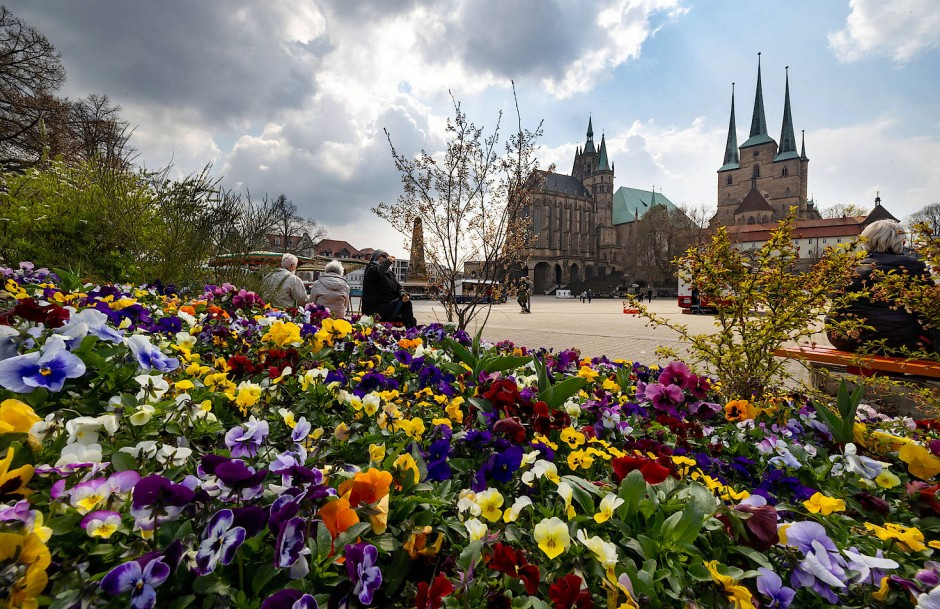 Eine Stadt freut sich: Stiefmütterchen am Domplatz sollen für die Bundesgartenschau werben.